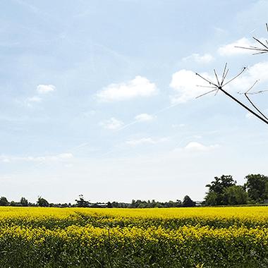 Right Surveyors East Anglia
