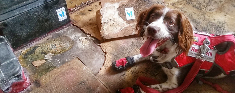 Guest Blog: Dogs – a surveyor's best friend?
